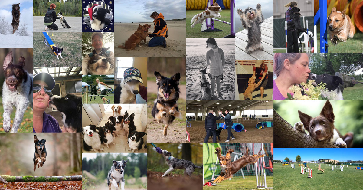 onemind-dogs-in-pictures