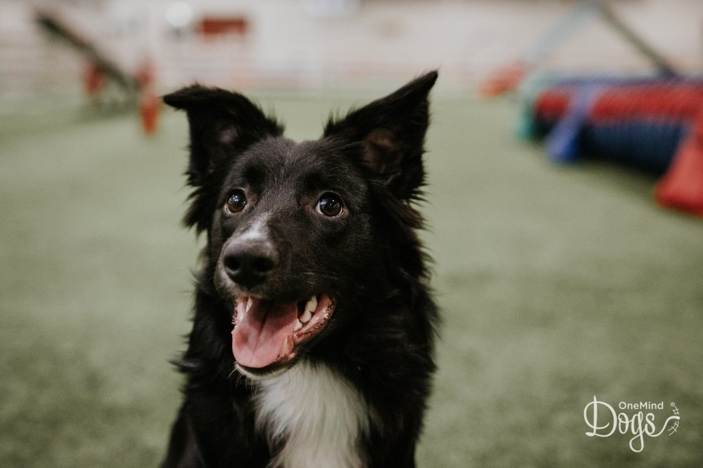 Dogs learn quickly with the OneMind Dogs method